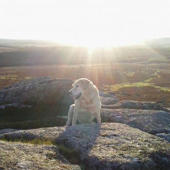 Oscar Dartmoor
