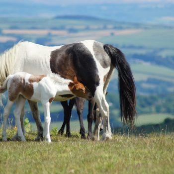 horses-3608304_1920